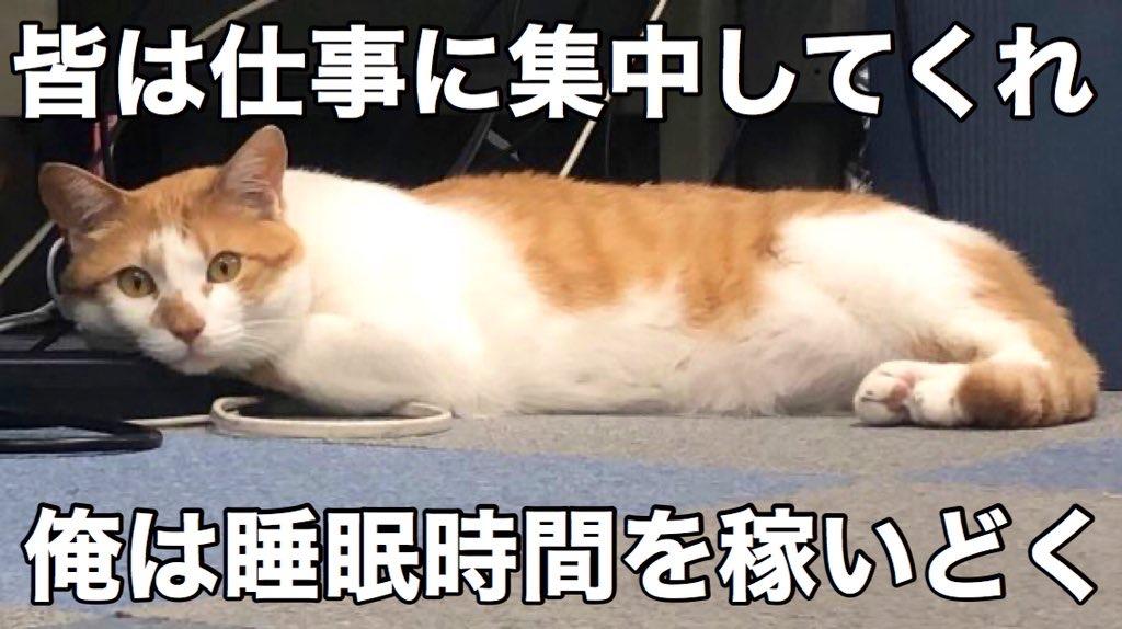 タマスケ 睡眠時間